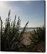 California Carlsbad Beach Hidden View Canvas Print