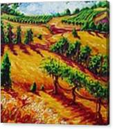 California Chardonnay Canvas Print