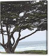 California Coast # 8 Canvas Print