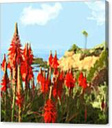 California Coastline With Red Hot Poker Plants Canvas Print