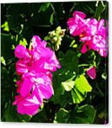 California Flowers Canvas Print