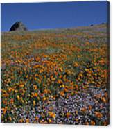 California Gold Poppies And Baby Blue Eyes Canvas Print