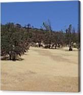 California Grass And Oak Trees Canvas Print