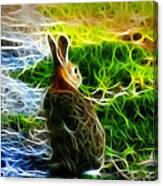 California Hare - 0297 Canvas Print