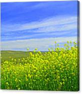 California In Spring Canvas Print