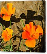 California Poppies - Crisp Shadows From The Desert Sun  Canvas Print