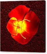 California Poppy By Nadine Johnston Canvas Print