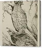California Quails Lithograph Canvas Print
