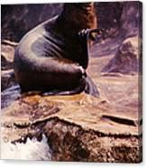 California Sea Lion Raising A Flipper Canvas Print