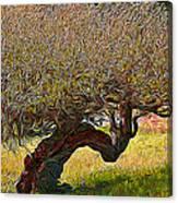California Summer Oak Canvas Print