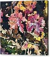 California Vineyard Series Fall Grape Leaves Canvas Print