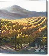 California Vineyard Series Vineyard In The Mist Canvas Print