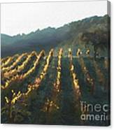 California Vineyard Series Wine Country Canvas Print
