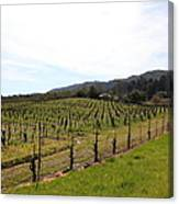 California Vineyards In Late Winter Just Before The Bloom 5d22114 Canvas Print