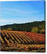 California Winery Apple Hill Canvas Print