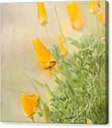 California's Poppy Canvas Print