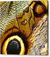 Caligo Atreus Canvas Print