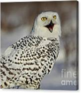 Call Of The North - Snowy Owl Canvas Print
