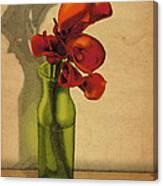 Calla Lilies In Bloom Canvas Print
