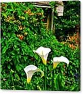 Calla Lilies Vertical Canvas Print