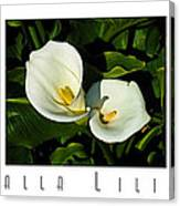 Calla Lilly Color Triptych With Title Only Canvas Print