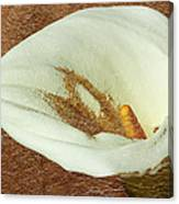 Calla Lily Gold Leaf Canvas Print