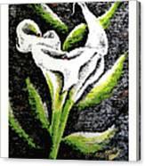 Calla Lily II Canvas Print