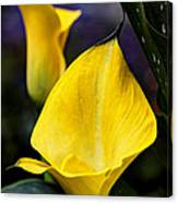 Calla Lily Portrait In Yellow And Green Canvas Print