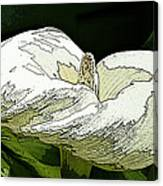 Calla Lily Sketch Canvas Print