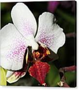 Callaway Gardens Orchid Canvas Print