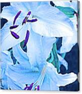 Calming Lily Canvas Print
