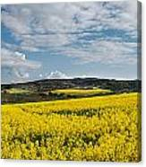 Caloa Field Canvas Print