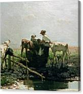 Calves At A Pond, 1863 Canvas Print