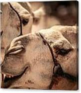 Camel Face Canvas Print