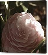 Camellia 2 Canvas Print