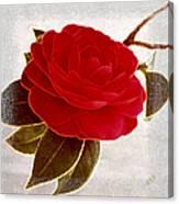 Camellia Spectacular Canvas Print