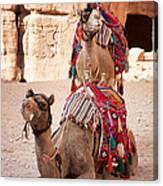Camels In Petra Canvas Print