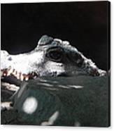 Camo-croc Canvas Print