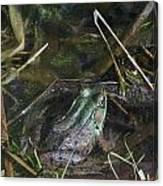 Camo Frog Ninja Canvas Print