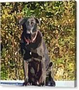 Camouflage Labrador - Black Dog - Retriever Canvas Print