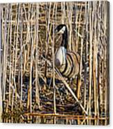 Camouflaged Canada Goose Canvas Print