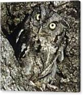 Camouflaged Screech Owl Canvas Print