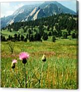 Chautauqua Wildflowers Boulder Canvas Print