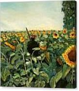 Campo Di Girasoli Canvas Print