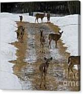 Can Deer Read Canvas Print