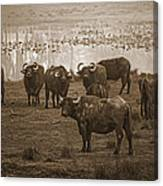 Can Not Roller Skate In A Buffalo Herd Canvas Print