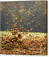 Can You See Me? Canvas Print