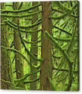 Canada, British Columbia, Mcmillan Canvas Print