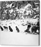 Canada Dog Sled, C1910 Canvas Print