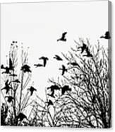 Canada Geese Flight Silhouette Canvas Print